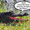 Alligator Yall Come Back Card by Al Powell Photography USA