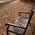 Alone With Autumn by Steven Milner