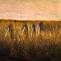 Along The Fence by Bill  Wakeley