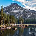 Alpine Beauty by Robert Bales
