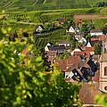Alsace Morning by Brian Jannsen
