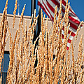 Amber Waves Of Grain And Flag by Valerie Garner