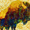 American Bison by Jack Zulli