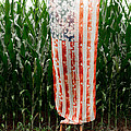 American Flag And A Field Of Corn by Kim Fearheiley