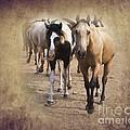 American Quarter Horse Herd by Betty LaRue