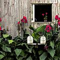 Amish Barn by Diane Diederich