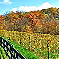 Amish Vinyard Two by Frozen in Time Fine Art Photography