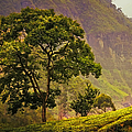 Among The Mountains And Tea Plantations. Nuwara Eliya. Sri Lanka by Jenny Rainbow