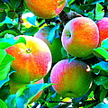 An Apple A Day by Kay Gilley