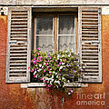 An Old French Window by Olivier Le Queinec