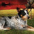 Animal - Dog - Always Faithful by Mike Savad