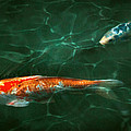 Animal - Fish - Koi - Another Fish Story by Mike Savad