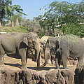Animal Park - Busch Gardens Tampa - 01131 by DC Photographer