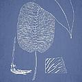 Anisogonium Cordifolium by Aged Pixel
