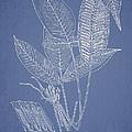 Anisogonium Lineolatum by Aged Pixel