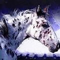 Appaloosa Pony by Roger D Hale