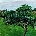 Apple Trees By The Sea Trouville by Gustave Caillebotte