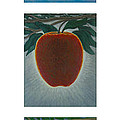 Apples Triptych 2 by Don Young