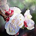 Apricot Flowers by Irina Sztukowski