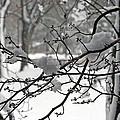 April Snow by Kay Novy
