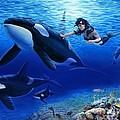 Aquaria's Orcas by Stu Shepherd