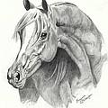 Arabian Stallion by Suzanne Schaefer
