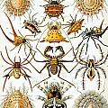 Arachnida by Georgia Fowler