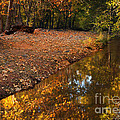 Arizona Autumn Reflections Print by Mike  Dawson