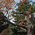 Arlington National Cemetery - 121242 by DC Photographer