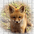 Artistic Cute Kit Fox by Thomas Young