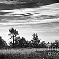 Ashdown Forest In Black And White by Natalie Kinnear