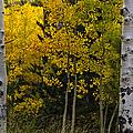 Aspen Light by Dave Dilli