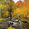 Aspens At Bishop Creek by Cat Connor