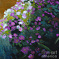 Asters by Melody Cleary