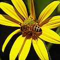 Australian Bee Snacktime by Margaret Saheed