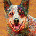 Australian Cattle Dog by Jane Schnetlage