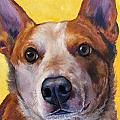 Australian Cattle Dog Red Heeler On Yellow by Dottie Dracos