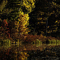 Autumn At It's Finest by Thomas Young