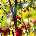Autumn Berries  by Stelios Kleanthous