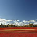 Autumn Blueberry Field Maine by Scott Leslie