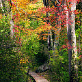 Autumn Boardwalk by Bill Wakeley