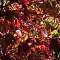 Autumn Breeze Print by Rona Black