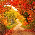 Autumn Cameo Road by Terri Gostola