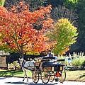 Autumn Carriage Ride Print by Barbara McDevitt