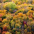 Autumn Colors by Matt Dobson