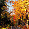 Autumn Country Road by Joann Vitali