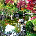 Autumn Dream by Carol Groenen