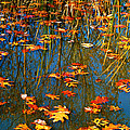 Autumn  Floating by Peggy  Franz