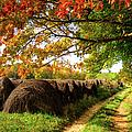Autumn Hay Bales Blue Ridge Mountains II by Dan Carmichael