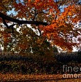 Autumn In The Country by Inspired Nature Photography Fine Art Photography